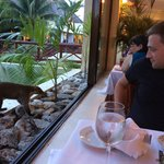 Native Coati joining me for dinner at Akumal buffet