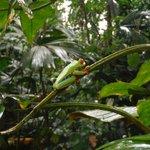 Frog at Ecocentro Denaus