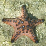 stelle marine a riva sulla spaiggia