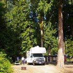 Willingdon Beach Campsite Foto