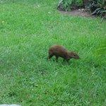 Fauna en el hotel