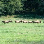 A large herd close to the road