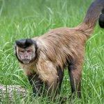 Oradea Zoo