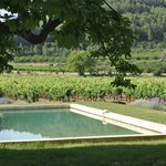 Looking across the pool to the Mas' vineyards.