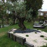 Un très beau jardin
