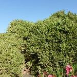 Les cactus des jardins