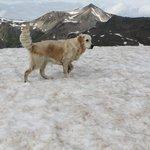 la mia cucciolona a 3000 metri sulla neve in agosto