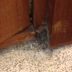 Dust behind the bathroom door
