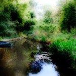 Monet'Garden Lily Pond