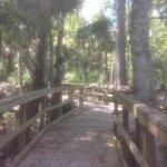 Swamp trail boardwalk. Good walk. My iPod got steamed up from how hot it was so it's a little ha