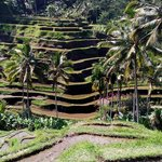 Balinese use their wisdom to 'create' land for paddy plantation. We able to know they work very