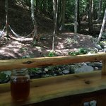 Hammocks and the creek on camp.  You can hear it while you sleep