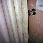 La cortina de ducha: un campo de cultivo de hongos