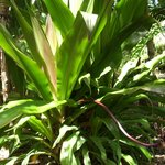 Tropical plants section - This is my fav.  This plant is over 6 feet tall.