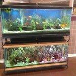 Nice aquarium in lobby