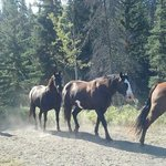 A few of the beautiful Echo Valley Ranch horses