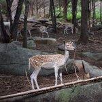 Deers gone wild....