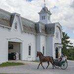 Morgan Horse Farm Day