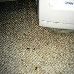 Dead bugs on bedroom floor by a/c