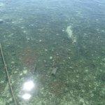 L'eau claire de la plage - plein de dechet