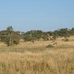 Blick zurück bei Abfahrt in die Serengeti, rechts das erhöhte Restaurant