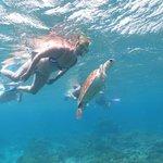 Zwemmen met een schildpad. In één woord GEWELDIG!