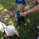 Finley bear and the swan