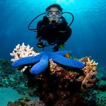 Privately guided scuba diver by Jay Wink