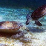 Aqua Marine Dive Center!
