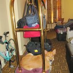 Our dog, Berkeley, on the cart waiting to be loaded after our stay in the Geiser Grand Hotel