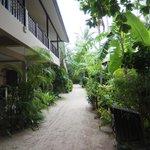 The sandy walkway to the beach