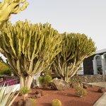 Cactus à l entrée de l hotel