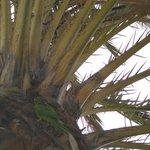 Perruches dans palmiers vers piscine hotel