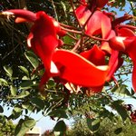 a beautiful flower from a tree in the gardens