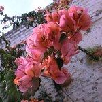 Flowers in courtyard