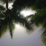Looking up from my Lounge Chair
