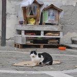 Кошачий домик на прилегающей площади