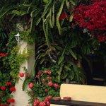 Omgivningar med de vackra blommorna.