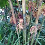 une végétation luxuriante du jardin