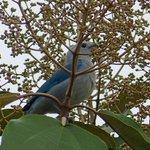bel oiseau du jardin