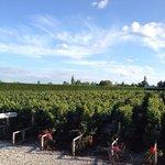 In house vineyards