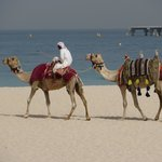 A camel ride on the beach