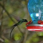 Hummingbird in the garden...