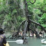 Black mangrove found in the inner lagoon