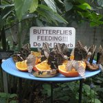 Butterfly diner
