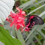 Lots of butterflies