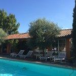 La piscine entourée d'oliviers et de lavande