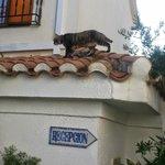 Grappige poes op een van de daken.