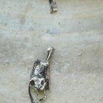 Fascinating, desicated frog