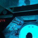 Bajo del mar (8)